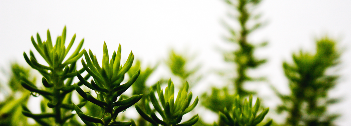 Buscamos empresas para Formació Dual de agricultura ecológica